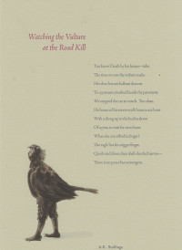 Watching the Vulture at the Road Kill